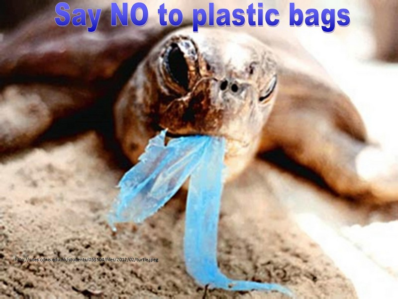 turtle with carrier bag in its mouth - some of the inspiration behind zero waste week